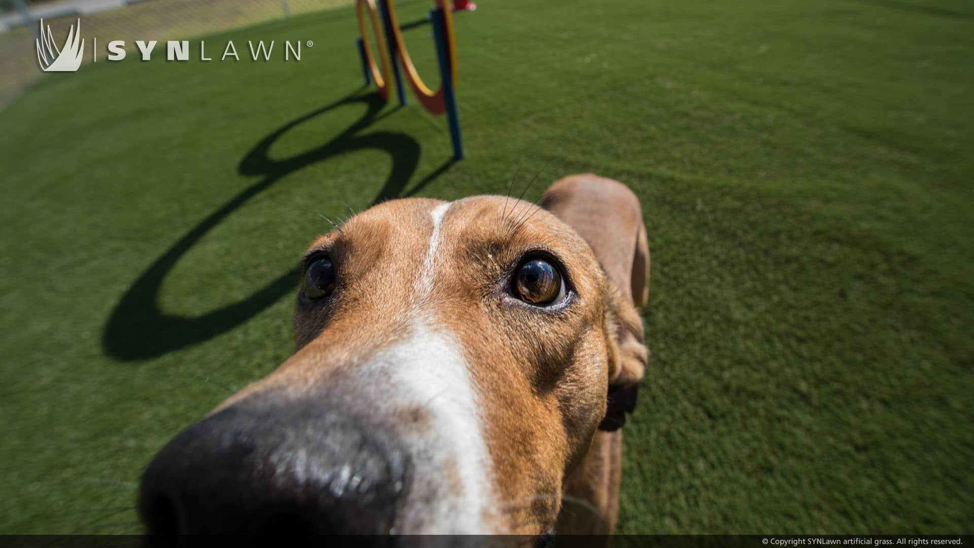 pet turf artificial grass for your pets