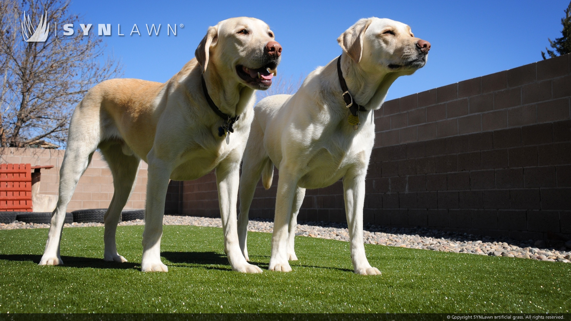 Indiana artificial grass for pets