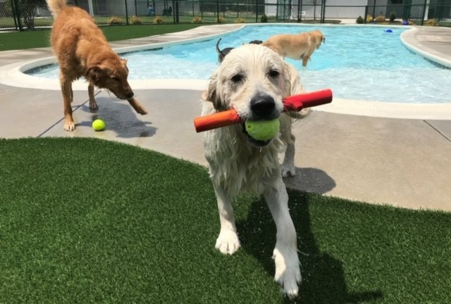 Pet turf by pool sides I residential dog park