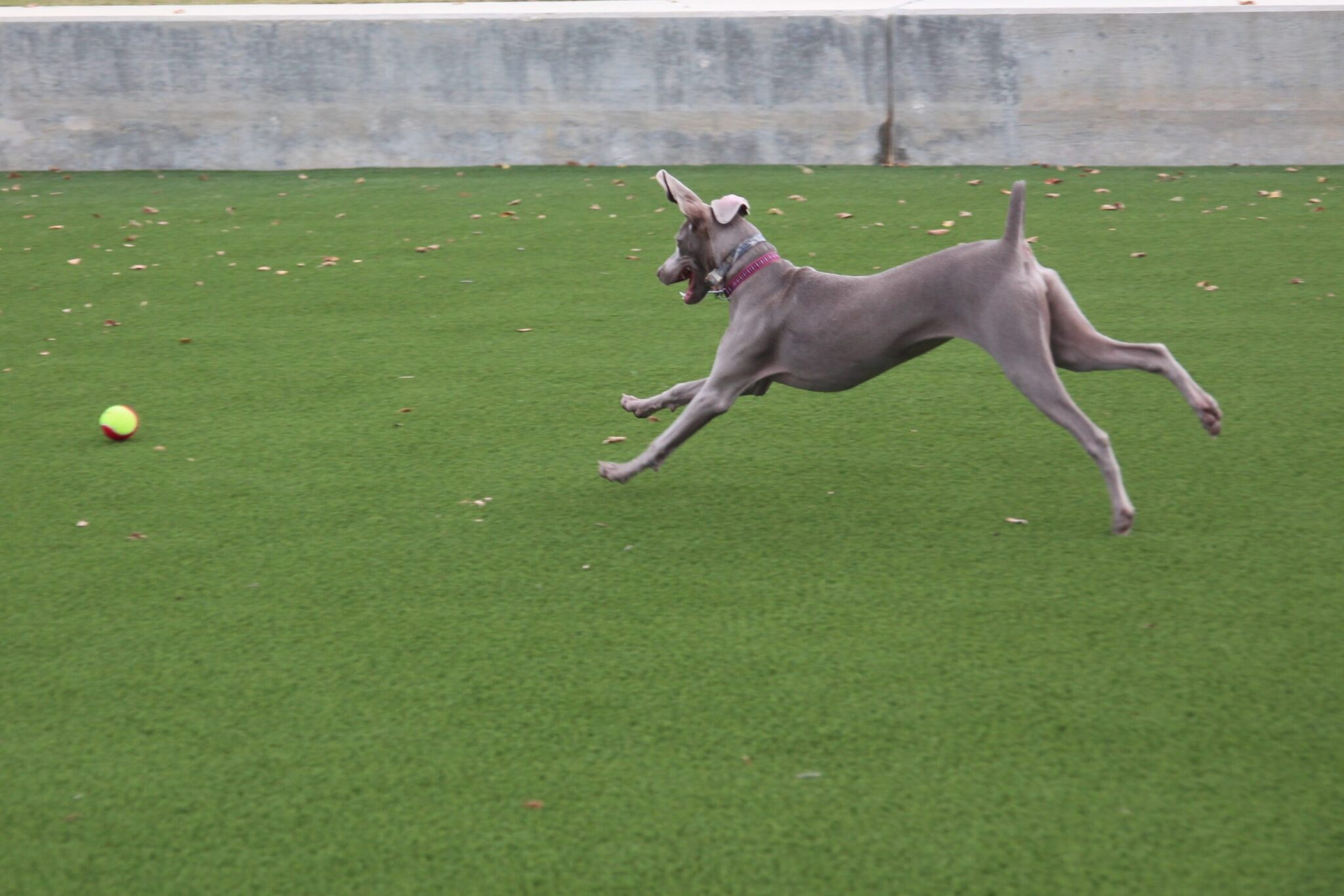 pet turf with artificial grass