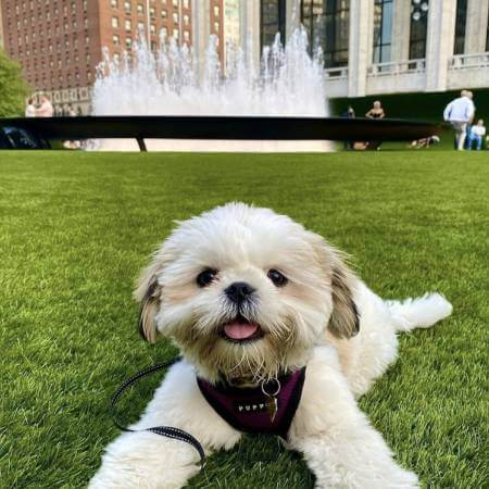 Indiana artificial pet turf by SYNLawn